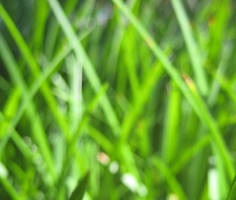 Grass Texture 2-Sunny Blurry by ErrantDreams
