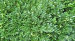 Leaf Texture 3-Bush
