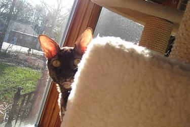 Peekaboo Cat by ErrantDreams