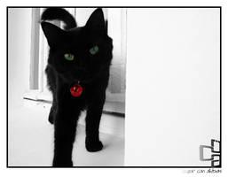 Cat by ozgurcanakbas