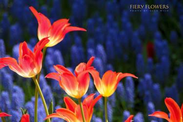 fiery flowers by AlexWild