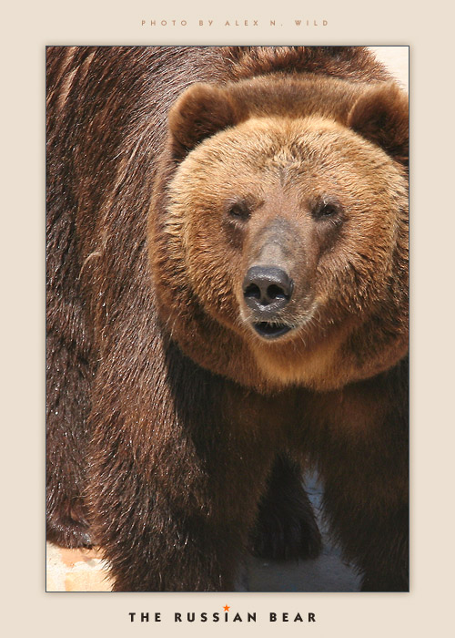 The Russian Bear by AlexWild