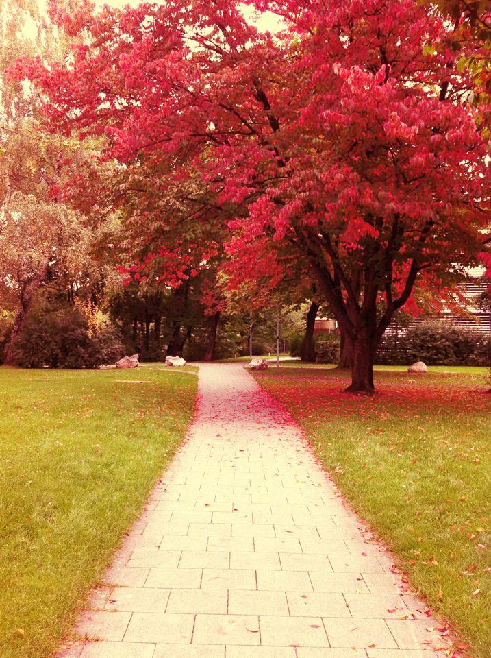 Avenue of Nature - Part II by DesertQueen