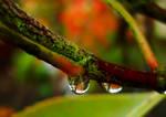 Luscious Autumn by TreeClimber