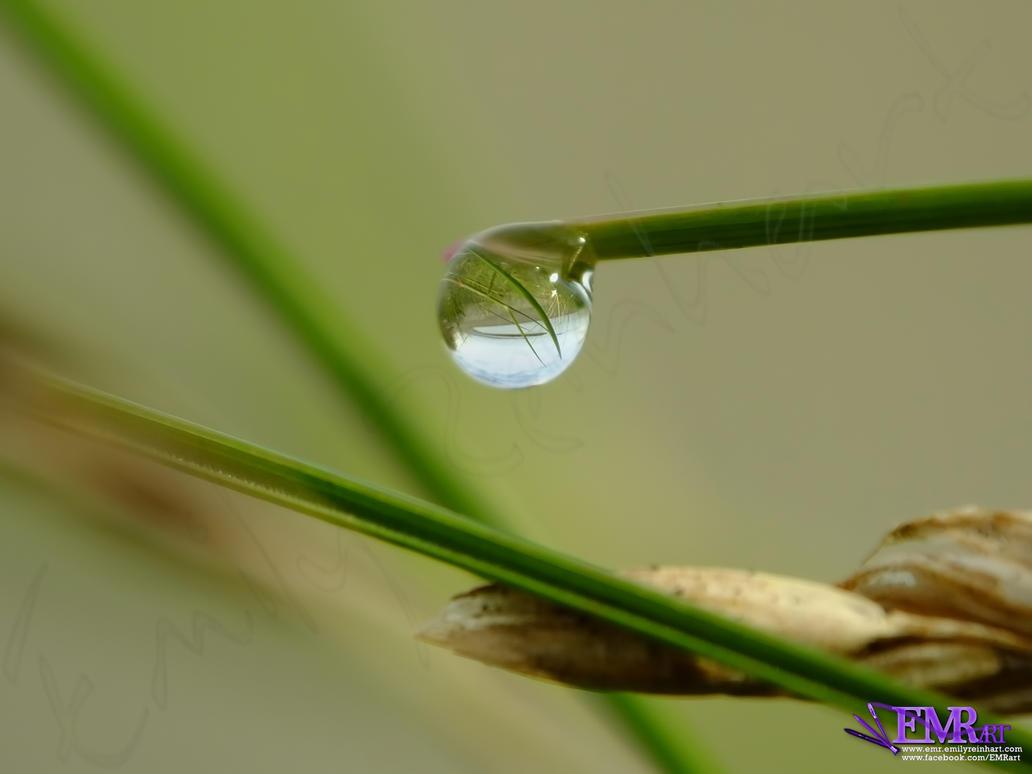 Rain Drop 2 by TreeClimber