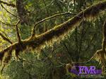 Forest Moss 01