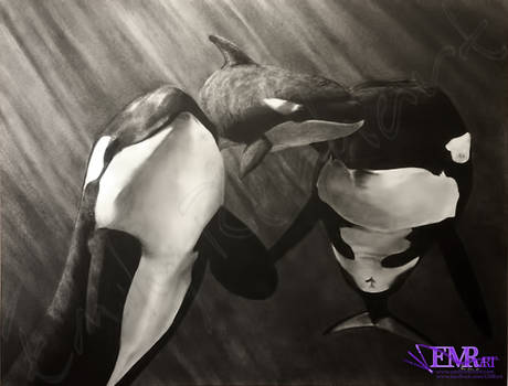 Orcas - SOLD