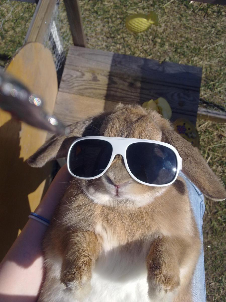 the cool bunny by dudesonandhtffan on deviantart