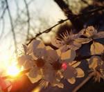 floareNsoare