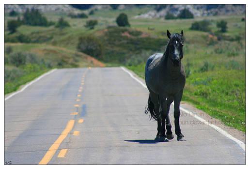 Gray Horse, Gray Road