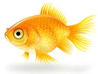 Goldfish by Dazy-Girl