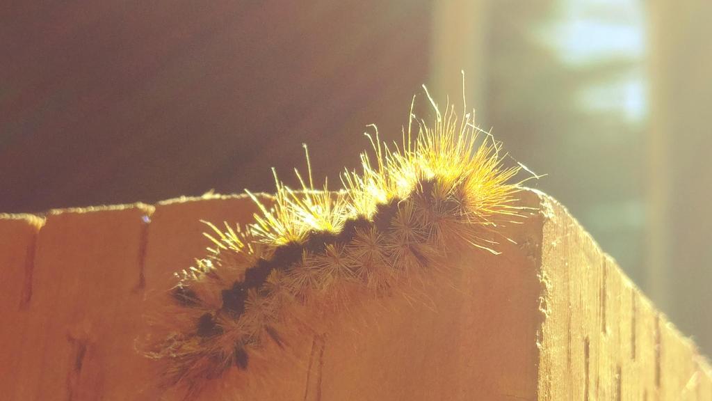 fuzzy caterpillar by ialliemilia