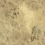 Seamless_Sand_0001 by JamesPodesta91