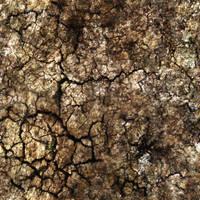 Ground_Texture_0001 by JamesPodesta91