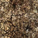 Ground_Texture_0001