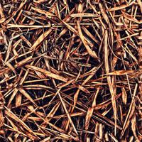 Dead_Grass_0001 by JamesPodesta91