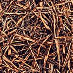 Dead_Grass_0001