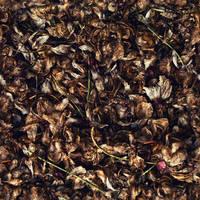Brittle_Autumn_Ground_Texture_Seamless by JamesPodesta91