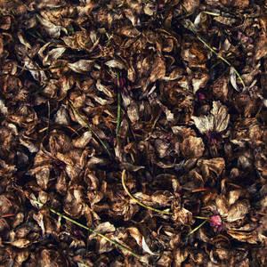 Brittle_Autumn_Ground_Texture_Seamless