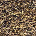 Dead_Grass_0002