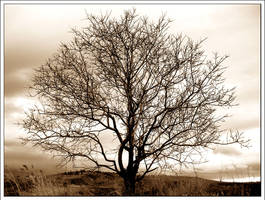 Th tree of life by Arathrim