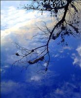 The branch by Arathrim