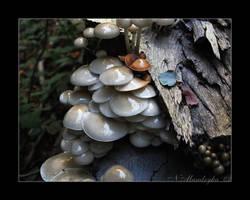 Slimey Mushrooms Part2 by darks