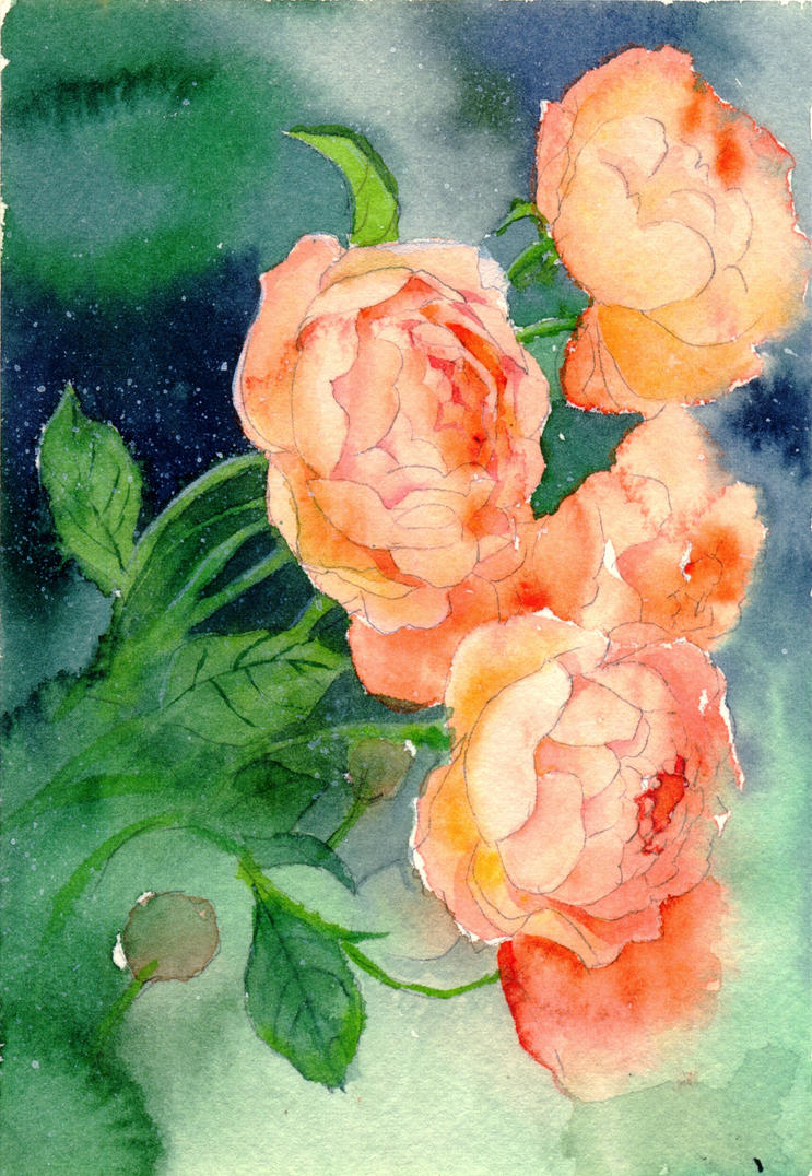 French Climbing Rose by sinvia
