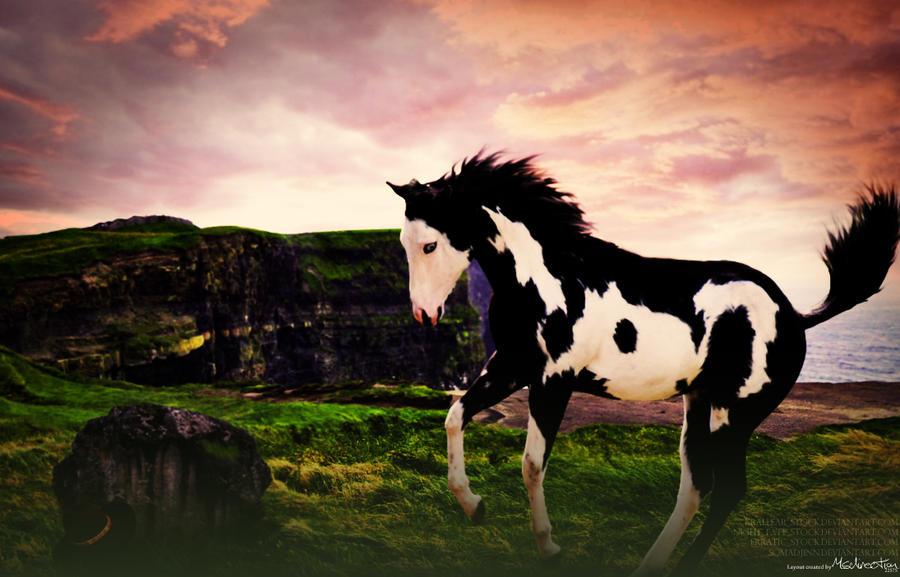 Paint Horse Stock Photos &amp- Paint Horse Stock Images - Alamy