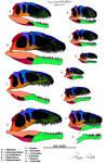 Allosauroidea skull comparison (to scale)