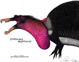 Marabou Spinosaurus by Dennonyx