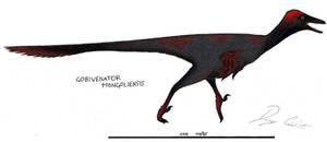 Gobivenator by Dennonyx