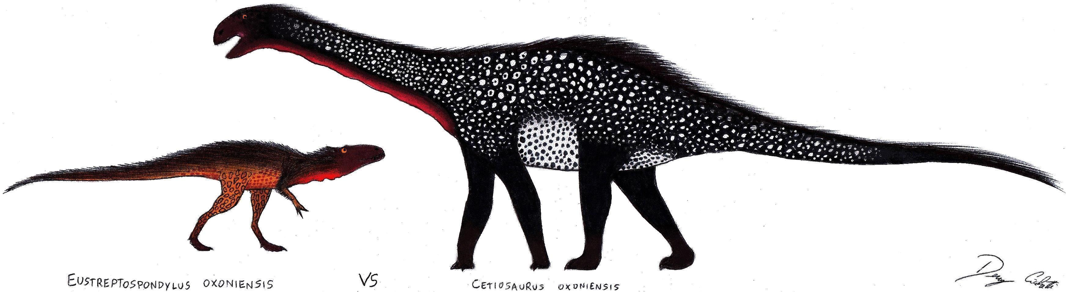 Eustreptospondylus VS Cetiosaurus by Dennonyx