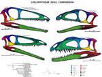 Coelophysidae Skull Comparison