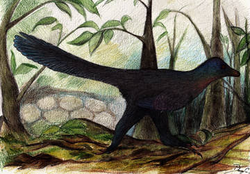 Running Rainbowraptor by Dennonyx