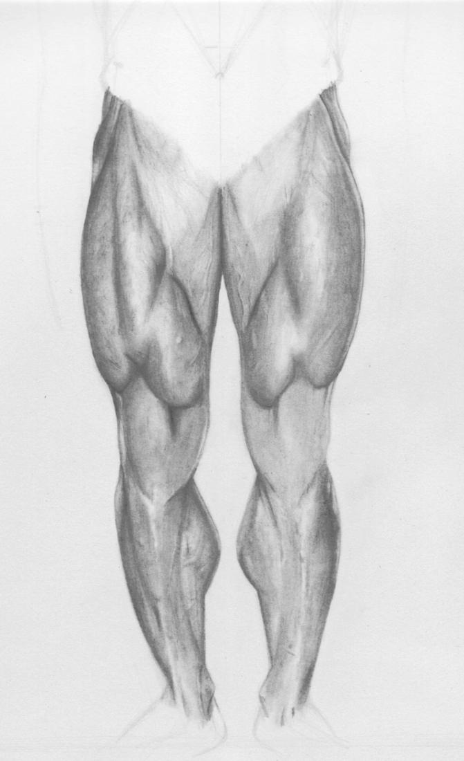 muscles of leg. Gallery | leg muscles