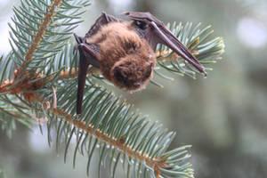 Little Brown Bat by TheSandvich