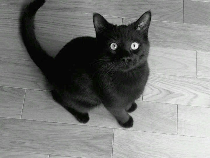 Baby Black Cat by TrashyDiamond on DeviantArt