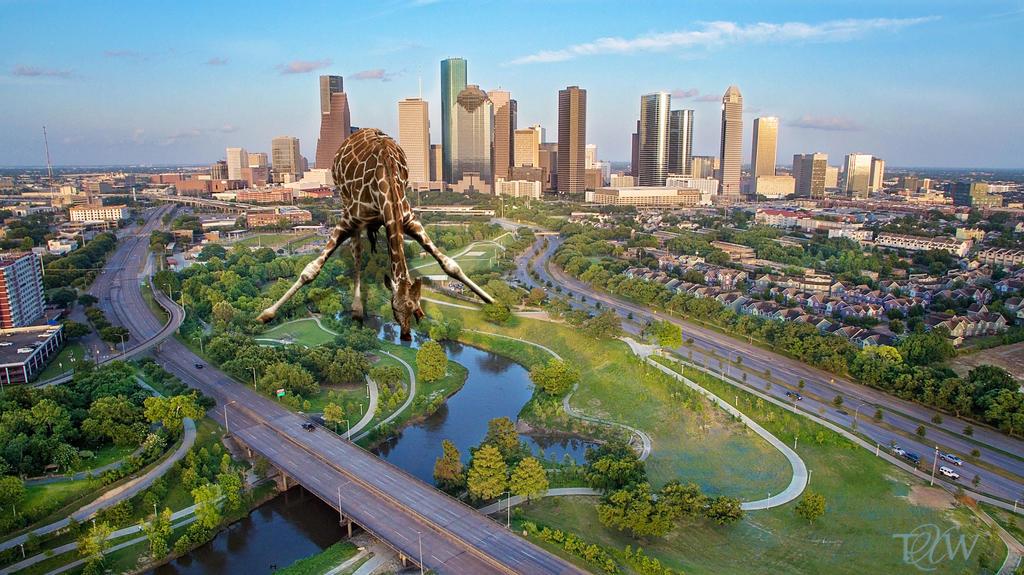 Giraffe Deserting Nature by trentsxwife