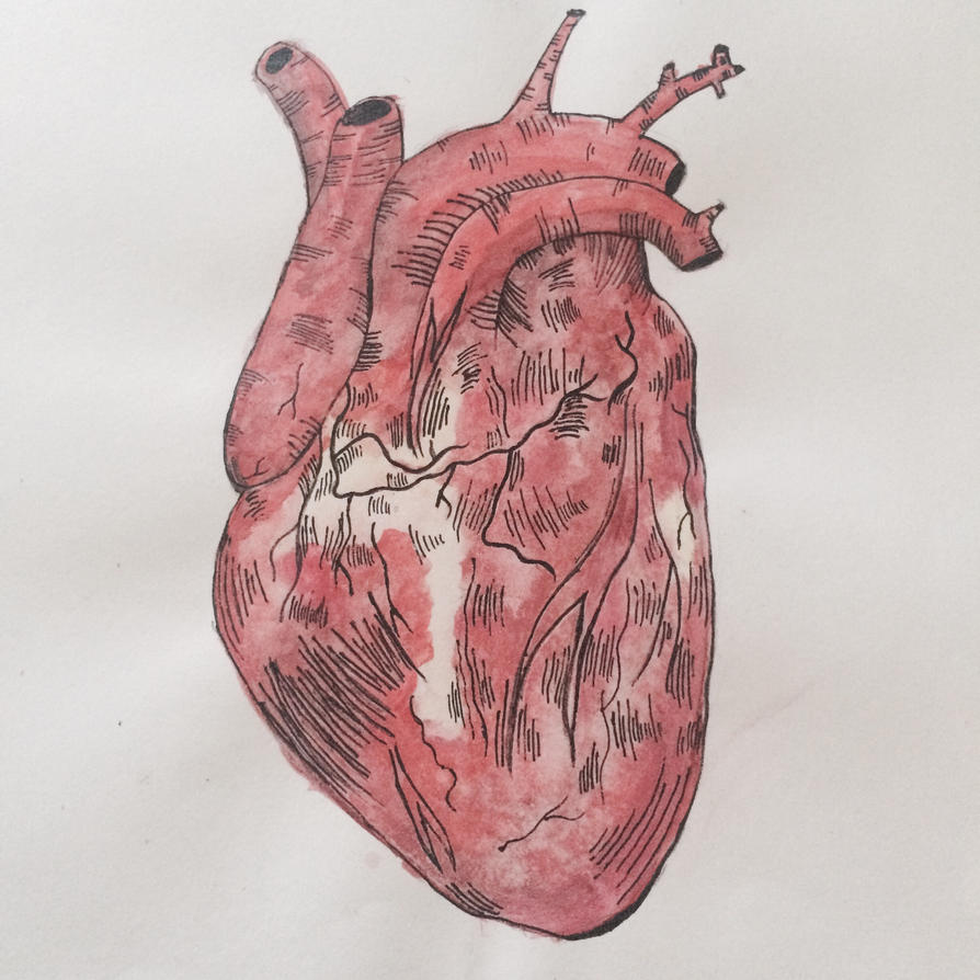 Heart by loruleshero