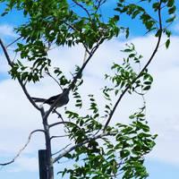 stalker bird ._.