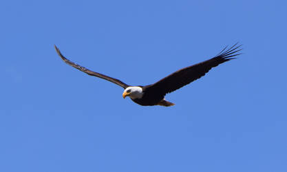 Eagle in the Blue 3 by how-much-i-love-you