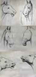 Horses by Dissendio