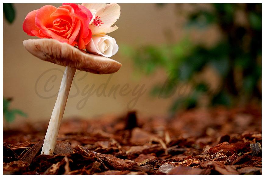 Floral Mushroom by DejaMort