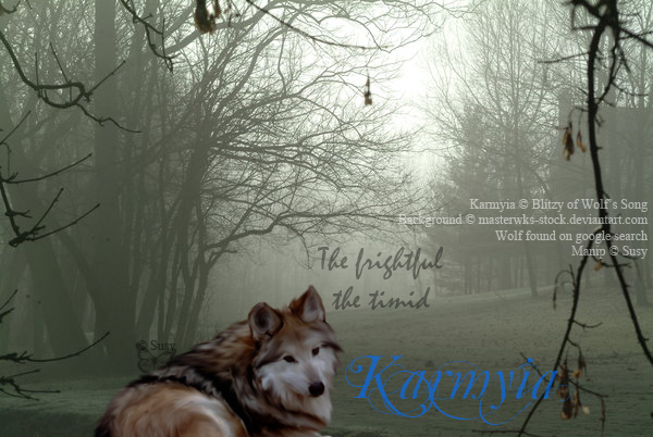 ^ Twilightstars ^ Wolves Karmyia_by_silver_wolfess2011