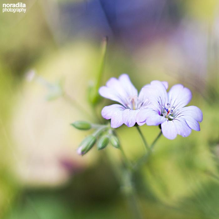 111020117 by Adila