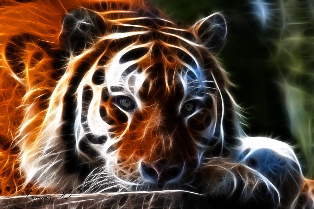 good tiger desktop wallpaper - photo #23