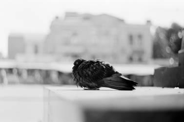 Loneliness by kraftzarco