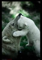Mother and cub polar bears by nairadan
