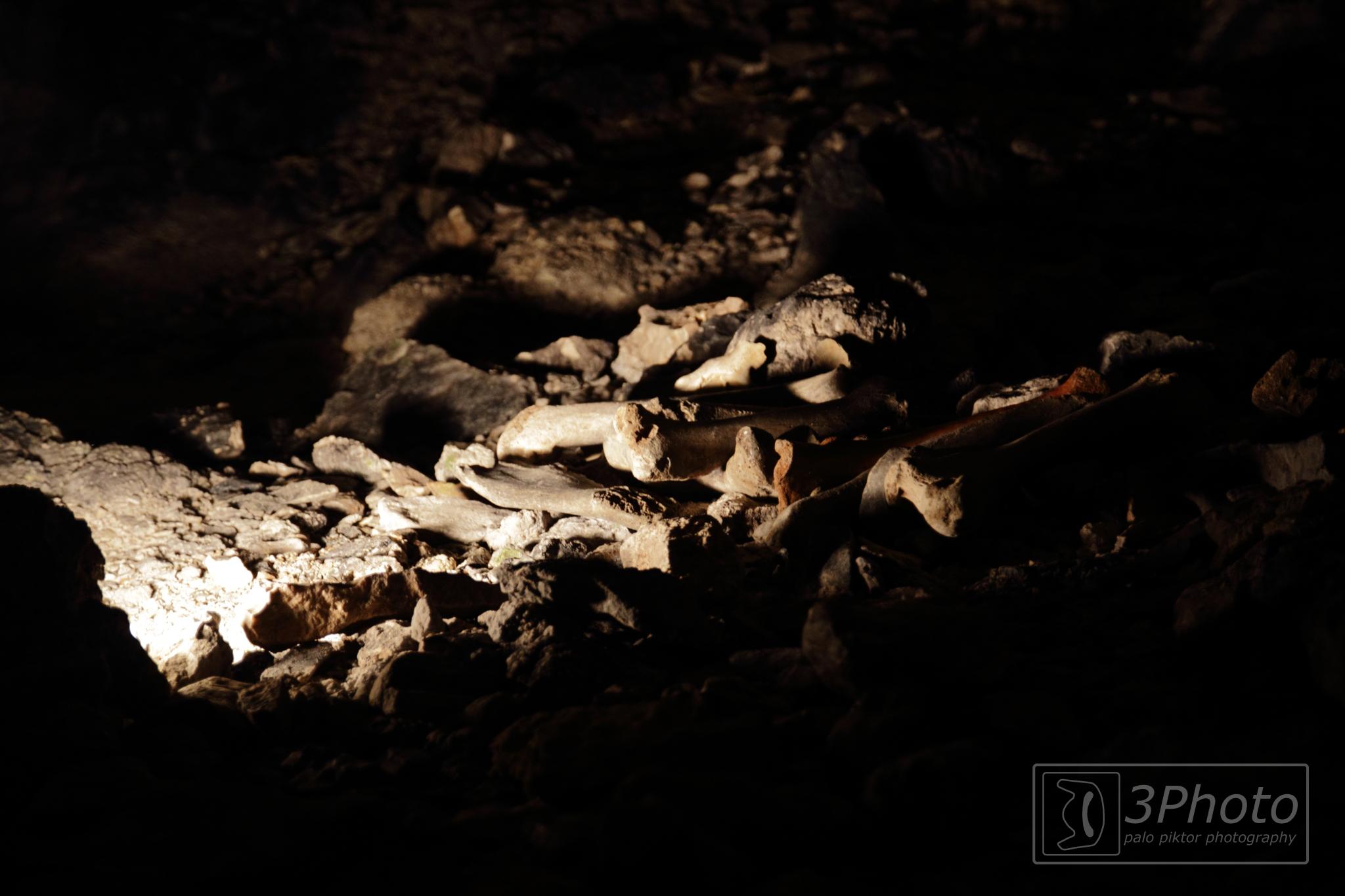 Bones by 3Photo